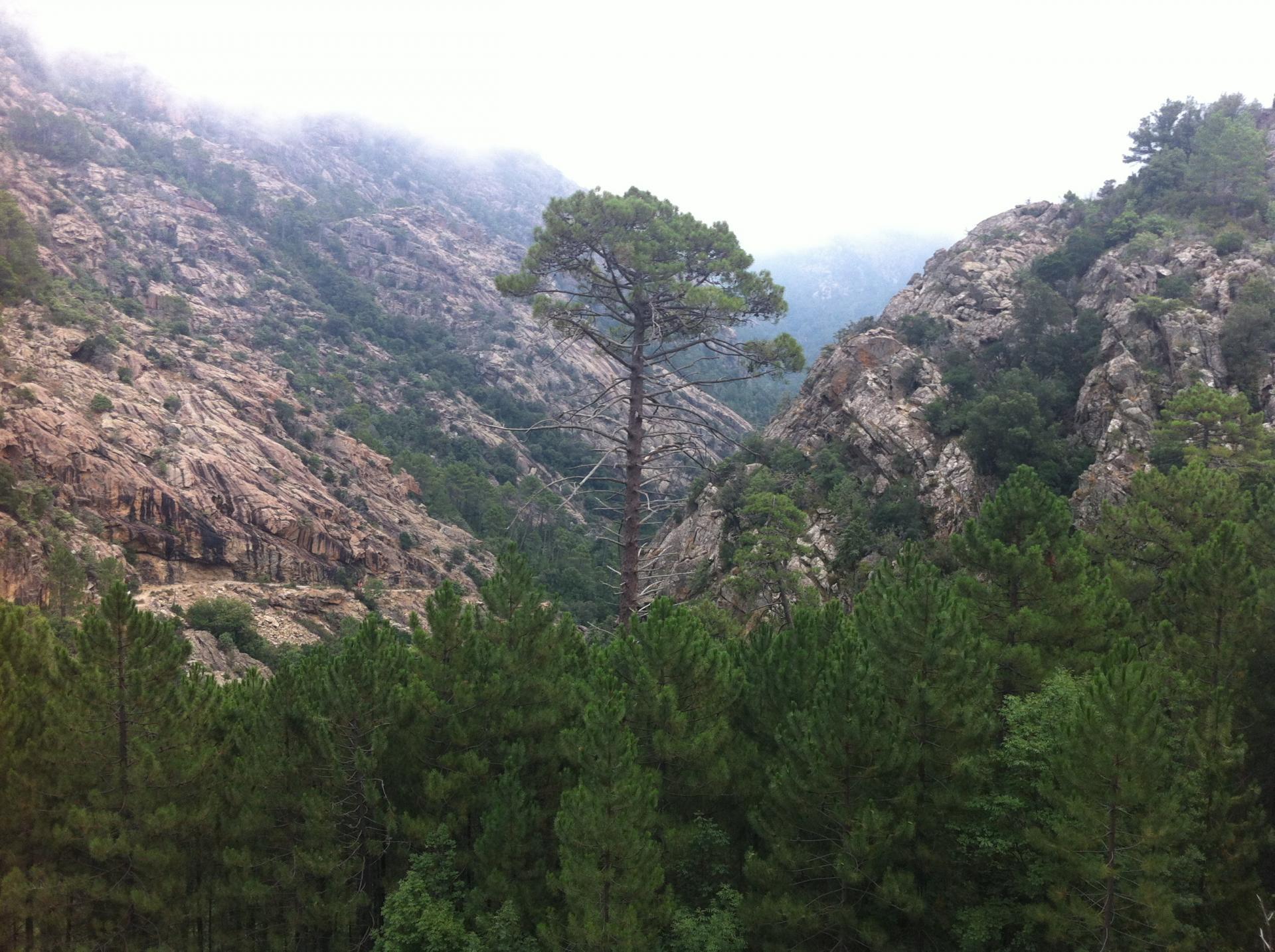 Forêt de Bonifato